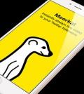 meerkat twiter 001